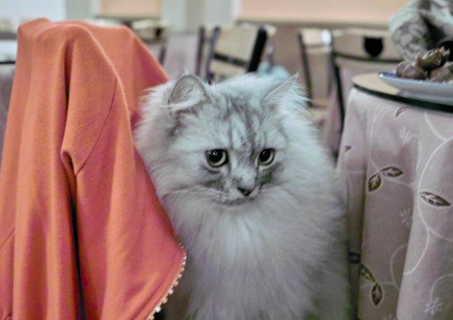 Cat10100913b.jpg