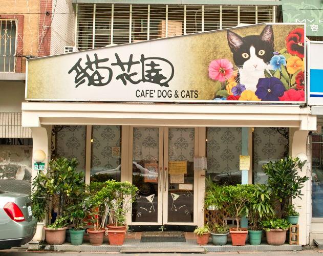 Cat1010091b.jpg