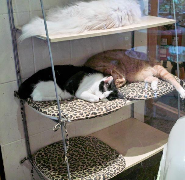 Cat1010095b.jpg