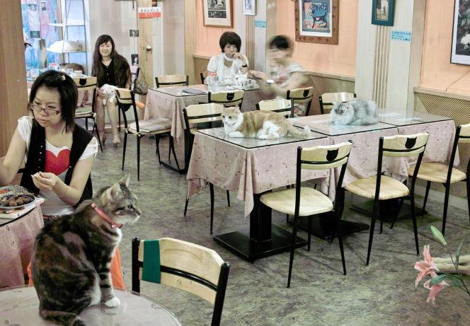 Cat1010096b.jpg