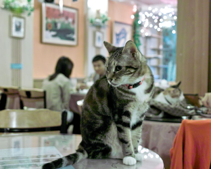 Cat1010097b.jpg