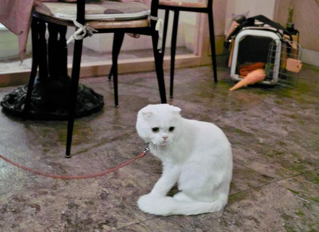 Cats10100915b.jpg