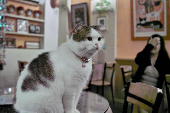 Cats10100919b.jpg