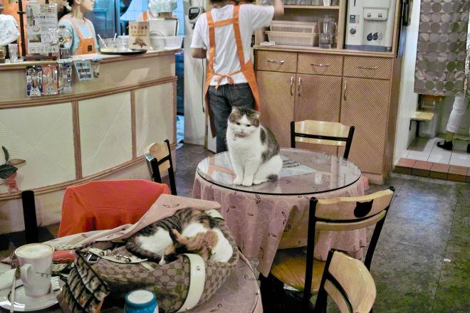 Cats10100920b.jpg