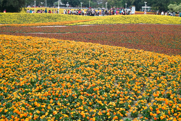 FlowerF914.jpg