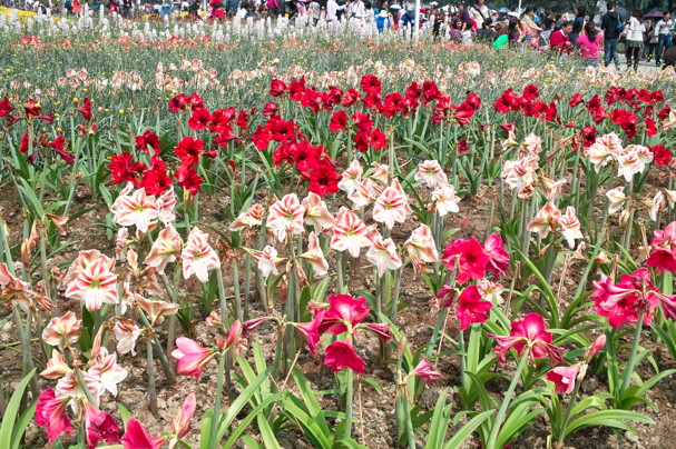 FlowerF917.jpg