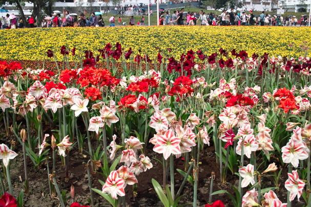 FlowerF920.jpg