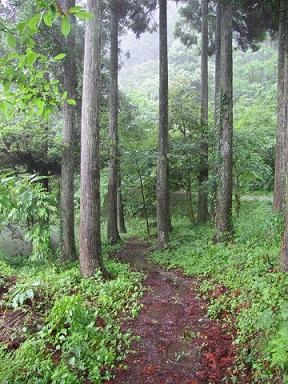 八女森林セラピー基地1