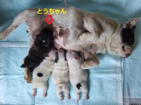 2009_04250001_convert_20120513145923.jpg