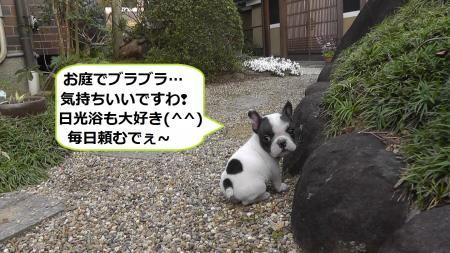 2012-04-19_060050(11)_convert_20120421171626.jpg