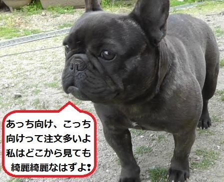 2012-04-29_074817(16)_convert_20120503130628_20120505093948.jpg