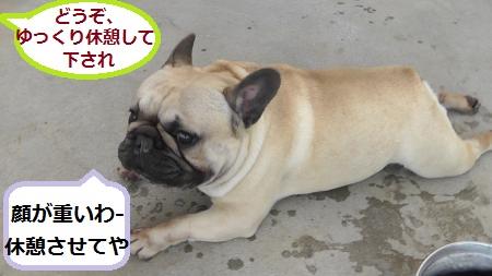2012-05-06_170810(61)_convert_20120509221806.jpg