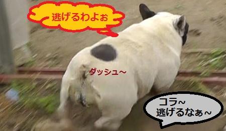 2012-06-02_063615_convert_20120602085732.jpg