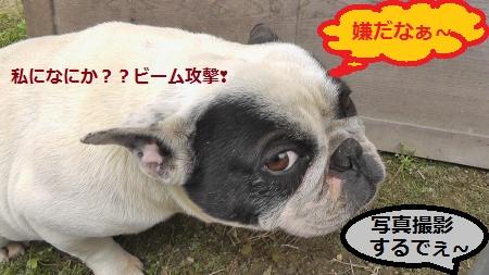 2012-06-02_064030(15)_convert_20120602085704.jpg