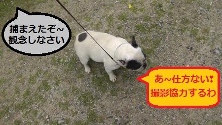 2012-06-02_064344(1)_convert_20120602085815.jpg
