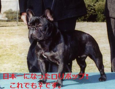 CH+FRENCHBULLDOGO+001+-+コピー_convert_20120126201201