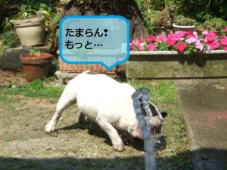 DSCF8869_convert_20120523201411.jpg