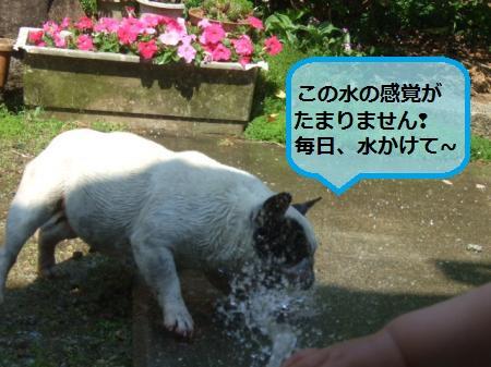 DSCF8885_convert_20120523201425.jpg