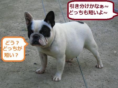 IMG_1687_convert_20120510220727.jpg