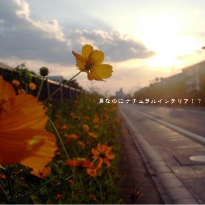 214_convert_20121010185502.jpg