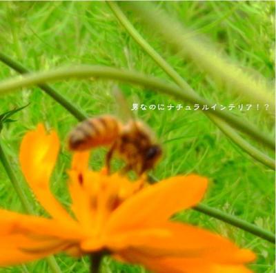 373_convert_20120114165152.jpg