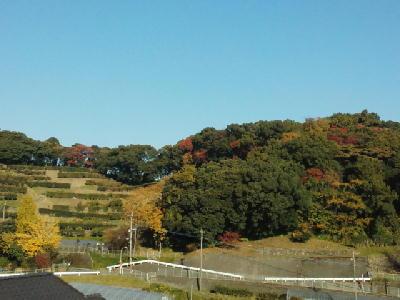 我が家の裏山の紅葉