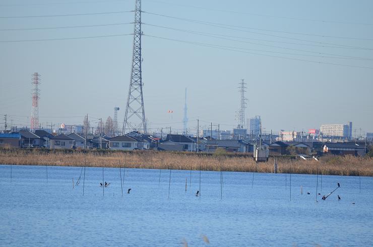 20131214朝日峠 (9)