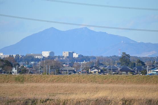 20131229白鳥の郷 (11)