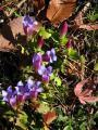 土手に咲くリンドウの花