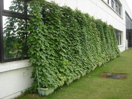 green-curtain-040.jpg