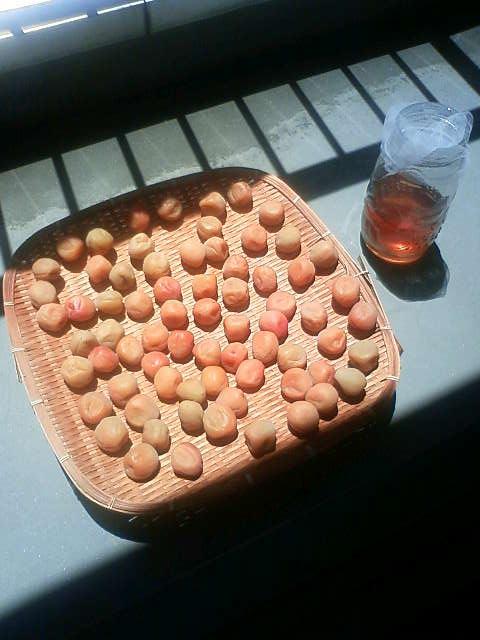 梅しごとごとごと