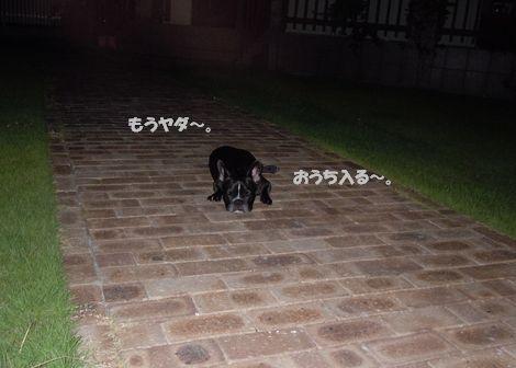 まる&みかん 100724花火 068ブログ