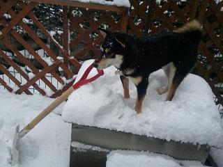 除雪より散歩に行きたいな