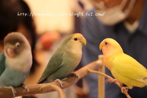 ぼたんちゃん、ぽちゃん&こちび1