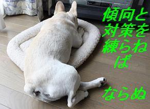 考えるイヌ