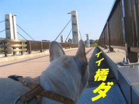 新大橋edz