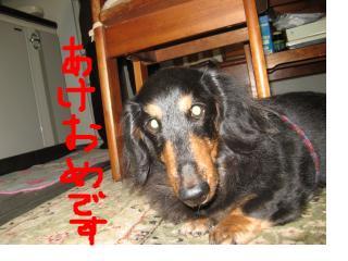 snap_fumi777_201110221832.jpg