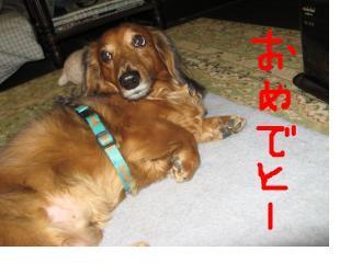 snap_fumi777_201110222144.jpg