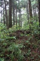筑波山登山道2011