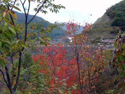 山桜の紅葉