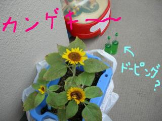 ヒマ子カンゲキ~