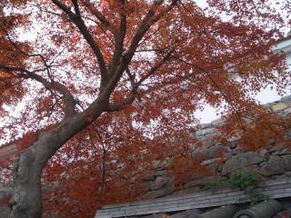 福知山城へ