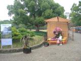 菊のタコさん