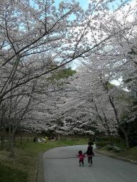 桜散策だ!