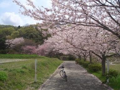桜withサイクロん号