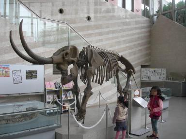 アケボノ象