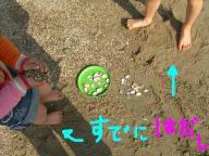 貝殻集め3