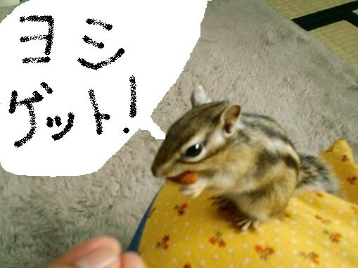 20101015gettosurajpg