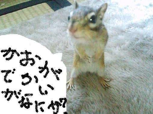 kaodekasurai2