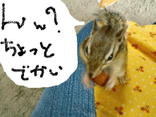 ookiiyosura